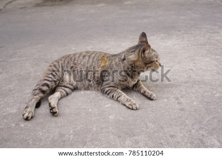 Thai cat sleep on the street #785110204