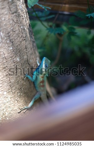 Stock Photo thai chameleon on tree