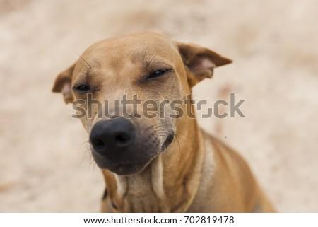 Thai dog #702819478