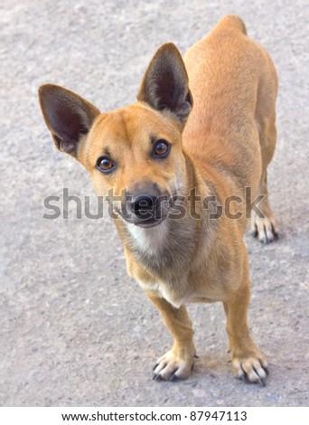 Thai dog on the street