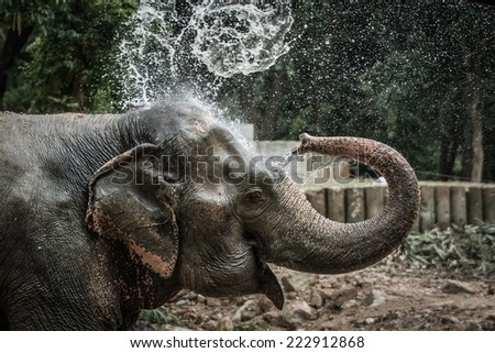 Thai elephant daily bath #222912868