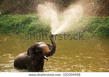 Thai elephant  daily bath  in Lumpang province, Thailand