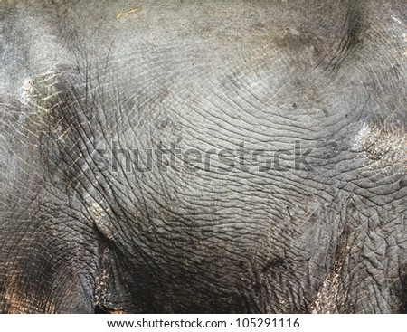 Thai Elephant skine texture for background