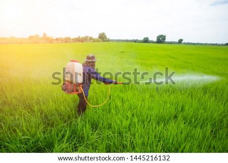 Thai farmer spraying insecticide in rice field Foto d'archivio ©