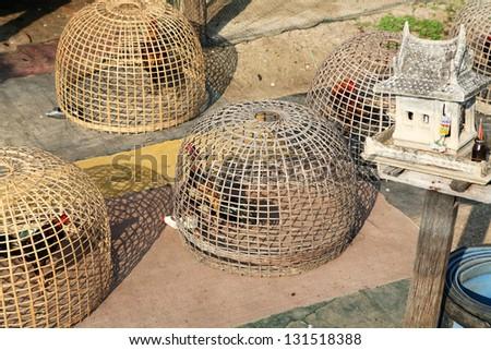 cock cage tjejer i stockholm
