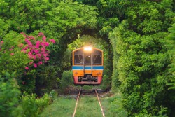 Thai local train on railway with green trees tunnel corridor, Bangkok, Thailand. Way through national park garden in summer season. Natural landscape background in transportation concept.