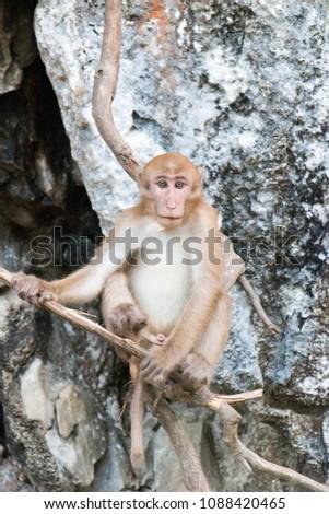 Thai Monkey Monkey with Monkey Ball #1088420465