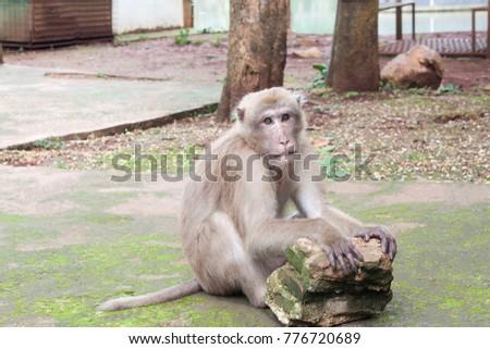 Thai Monkey Monkey with Monkey Ball #776720689
