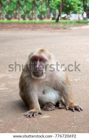 Thai Monkey Monkey with Monkey Ball #776720692