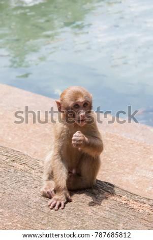 Thai Monkey Monkey with Monkey Ball #787685812