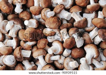 thai mushrooms - stock photo