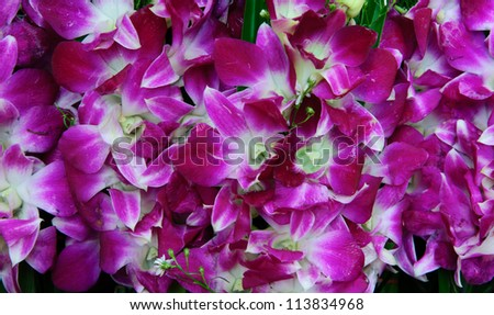 thai orchid in market