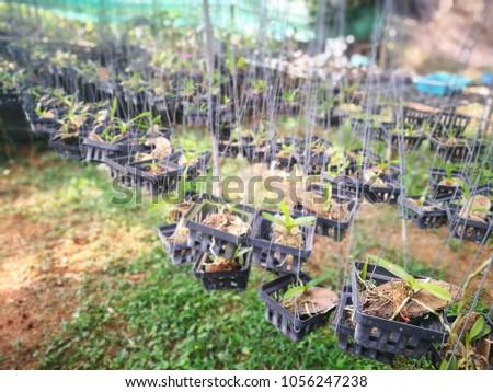 Thai orchid nursery #1056247238