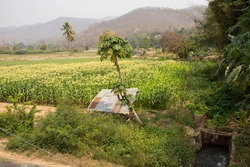 Thai people transplant corn seedlings in farmland of corn field at riverside pai river with landscape mountain at Tha Pai World War II Memorial Bridge at Pai city valley hill in Mae Hong Son, Thailand