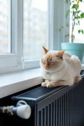 Thai (Siamese) red point cat dozes (nap) or rests basking on a warm black radiator while enjoying heating at home near the window. Copy space.