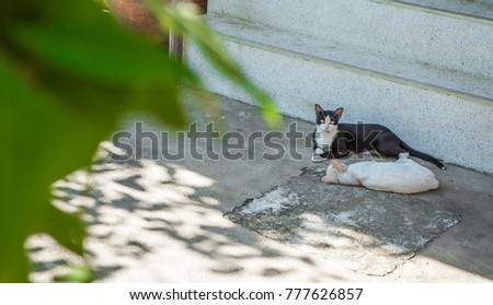 Thailand cat in the garden #777626857