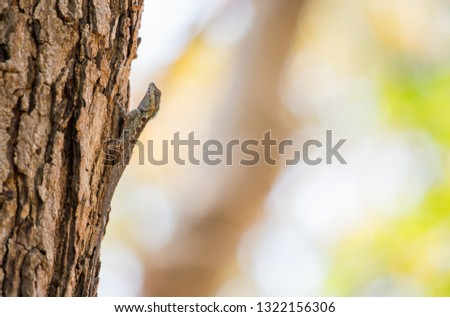 Thailand chameleon is Camouflage like a bark with bokeh background.