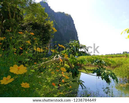 Thailand Countryside. Nature in the countryside with flowers, canals, papaya trees. There are fields and limestone mountains more than 300 million years old. Phitsanulok Province.