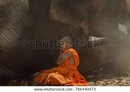Thailand Novice monk sleeping with a elephant this is  lifestyle of child in Surin village Thailand.