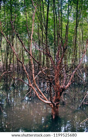 Thailand tropical mangrove swamp forest with exotic tree and roots complex and roots complex and roots complex #1199525680