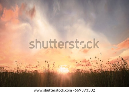 Thanksgiving background concept: Stunning meadow sunrise.