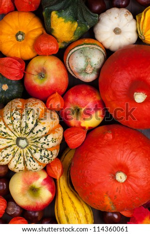 Thanksgiving background - pumpkins and apples for Thanksgiving #114360061