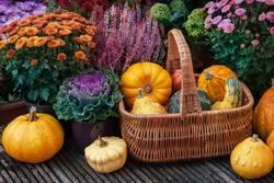 Thanksgiving decor with pumpkins  in a garden