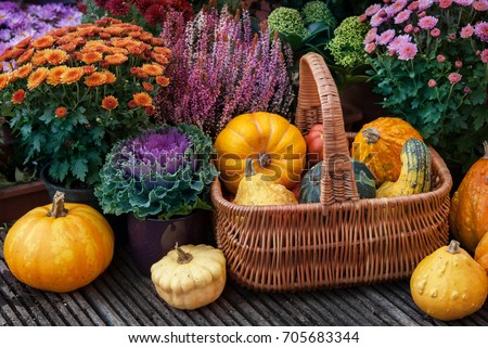 Thanksgiving decor with pumpkins  in a garden #705683344