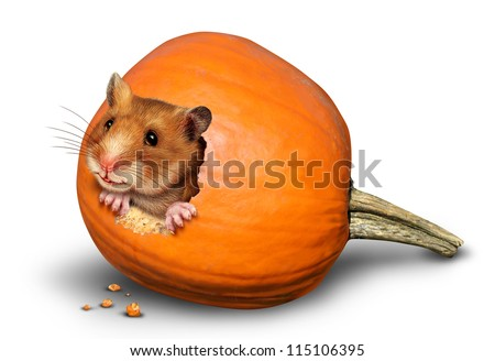 Thanksgiving harvest symbol with a fun pet hamster inside a hole of an eaten pumpkin on a white background as a concept of giving thanks for the abundance of fresh produce and autumn crops.