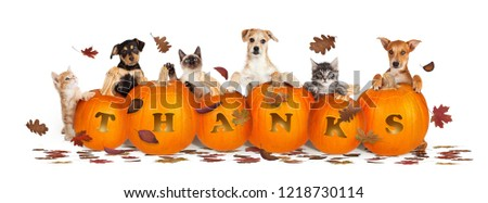 Thanksgiving pet web banner banner with leaves and pumpkins with word Thanks carved #1218730114