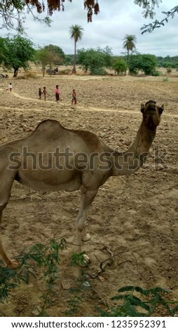 That a good pic of camel