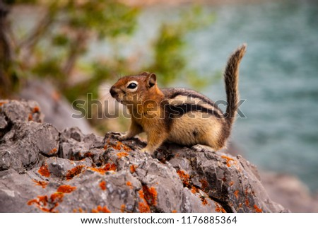 That's how chipmunks greet you in Lake Minnewanka, Banff, Canada