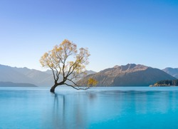 That's Wanaka tree with blue sky and clear turquoise water in Wanaka Lake, the most famous lonely tree landmark of South Island. Million tourist come to visit the alone willow tree. Otago, New Zealand
