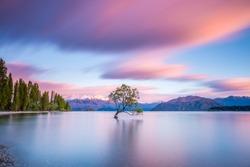 That Wanaka Tree at sunrise | Wanaka, NEW ZEALAND