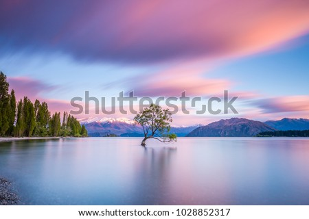 That Wanaka Tree at sunrise | Wanaka, NEW ZEALAND
