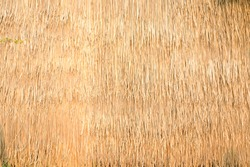 Thatched with leaves grass roof or wall. Close up of thatch roof background, Hay or dry grass background, Thatched roof, Grass hay, dry straw, Roof background texture..