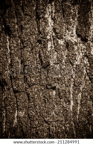 The abstract background from the bark texture #211284991