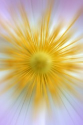 The abstract photograph of a flower / Abstract flower