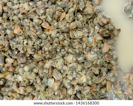 The abstract texture of oysters, oysters is a group of shellfish #1436168300