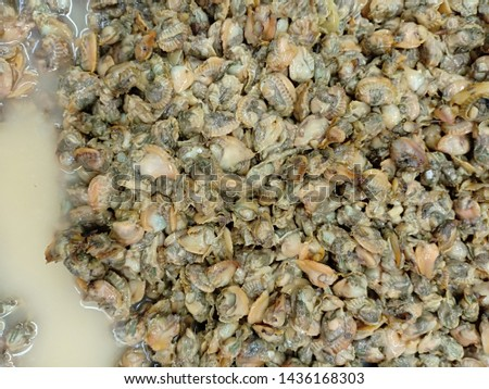 The abstract texture of oysters, oysters is a group of shellfish #1436168303