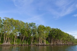 The abundance of mangrove forest in Yaring District, Pattani, Thailand