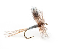 The Adams Dry, world's most popular dry fly for trout