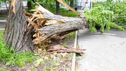 The aftermath of a hurricane. Broken trees, fallen road signs.