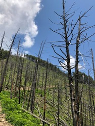 the aftermath of forest after forest fire. photo about forest after burning. climate change concept