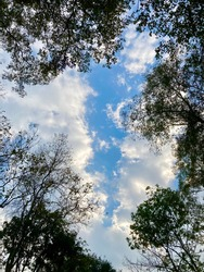 The afternoon blue sky lookup from under the big tree.