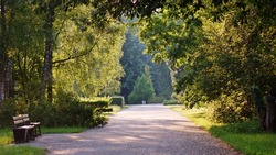 The alley in the shade of the trees - the botanic garden in Lodz