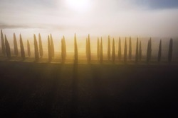 The alley of cypress trees on the plowed field shooted in the early misty morning when the first sun rays making a long shadows. Aerial top view shot.