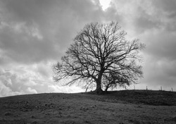 The alone tree in field against dark sky