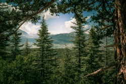 the amazing cedar forest are the lungs of the world