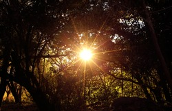 The amazing ray lights of the sun across foliage an enlightenment experience of wanderlust